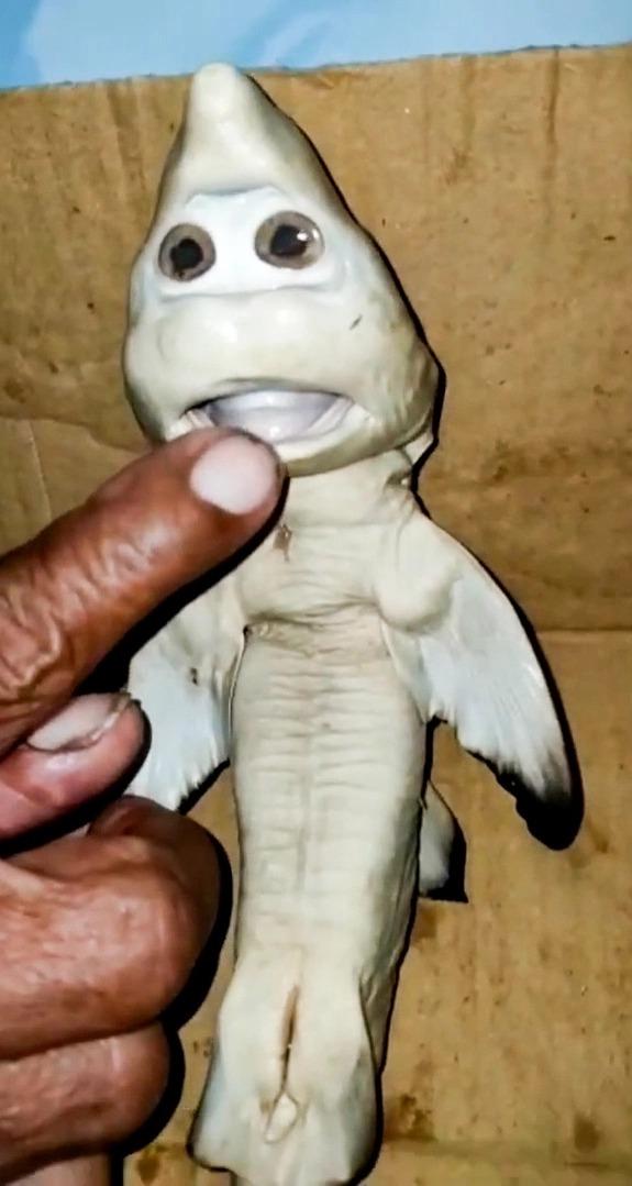 صياد يعثر على سمكة قرش صغيرة متحولة ذات وجه بشرى.. ويرفض بيعها لهذا السبب 1 24/2/2021 - 7:43 م